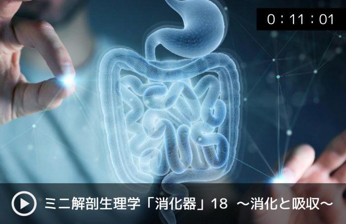 オンライン大学・解剖生理学・消化器系